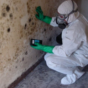 mold inspections houston